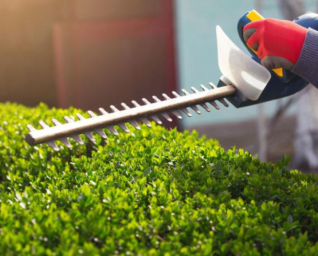 Comment faire l'entretien de votre jardin?