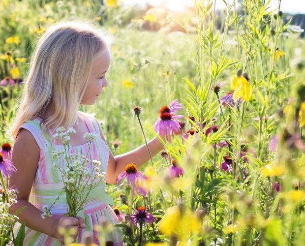 Quelques composantes essentielles pour aménager son jardin