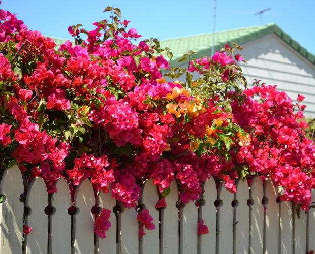 Top 5 des fleurs exotiques pour sublimer votre studio de jardin ou maison en bois
